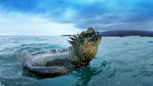 Ecuador - Galápagos - zeeleguaan