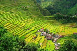 Filipijnen - rijstterras