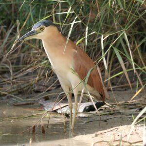 Australië - vogel