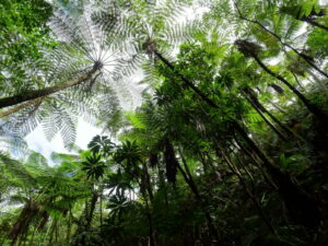 Vanuatu - regenwoud