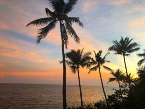 Filipijnen - palmbomen