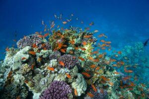 Guadeloupe - Cousteau Marine Park
