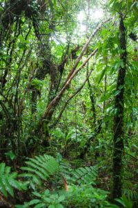 Guadeloupe - regenwoud