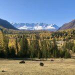 Rusland Altai - bossen