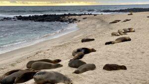 Ecuador - Galápagos - zeehonden