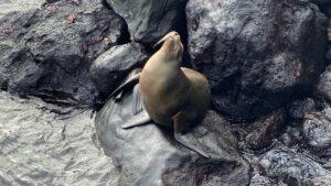 Ecuador - Galápagos - zeehond