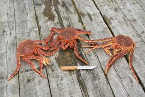 Kamchatka - King crab