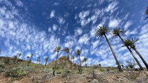 La Gomera - palmbomen