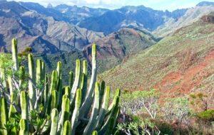 La Gomera - cactus