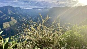 La Gomera - vallei