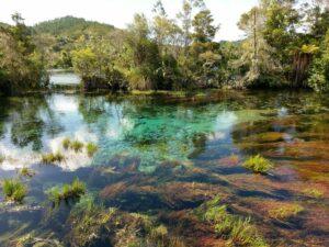 Nieuw Zeeland - Te Waikoropupu bron
