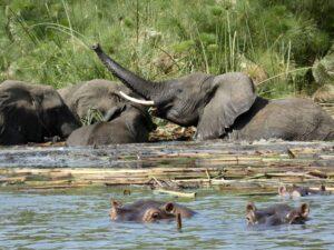 Oeganda - olifant
