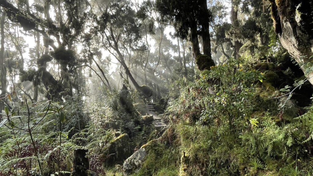 Oeganda - natuur