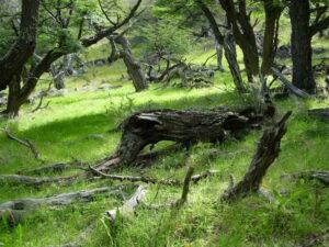 Patagonië - natuur
