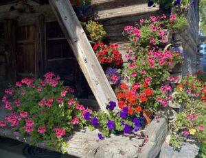 Zwitserland - bloemen